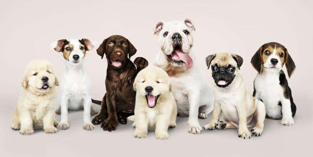 Cannabidiol til hunde og katte